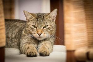क्यों बिल्ली मानी जाती है अशुभ ?
