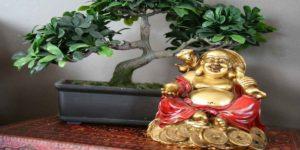 फेंगशुई टिप्स: घर के किस कोने में लगाए यह पौधा और पाए पैसे व लंबी आयु का वरदान !