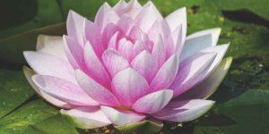 पूजा में क्यों चढ़ाया जाता है फूल, जानें फूलों का महत्व!