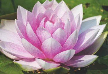 पूजा में क्यों चढ़ाया जाता है फूल, जानें फूलों का महत्व