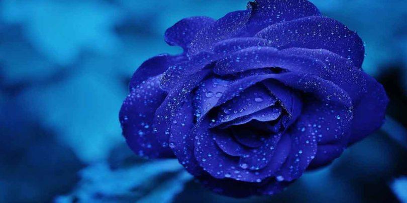 सपने में नीला फूल देखने का मतलब