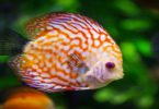 मछली का सपने में दिखने का मतलब