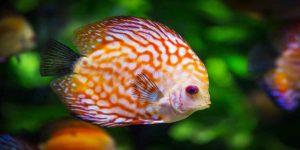 मछली का सपने में दिखना शुभ या अशुभ!