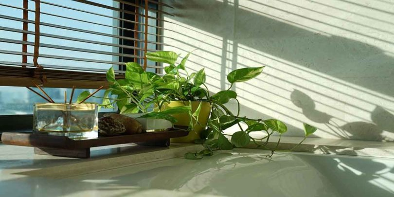 फेंगशुई टिप्स: बनना है धनवान तो घर लाए यह पौधें