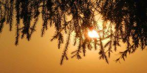ज्येष्ठ पूर्णिमा 2019: जानें महत्व, शुभ मुहूर्त और पूजा विधि