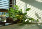 वास्तु टिप्स: घर पर पौधा लगाने से पहले जानें यह खास बातें