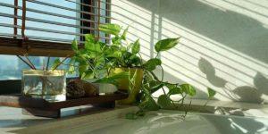 वास्तु टिप्स: घर पर पौधा लगाने से पहले जानें यह खास बातें!