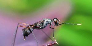 सपने में चींटी देखने का क्या है मतलब?