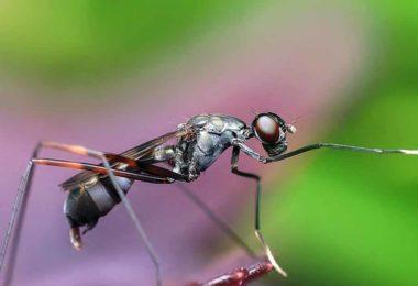 सपने में चींटी देखने का क्या है मतलब
