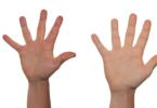 हाथों की ये रेखाएं